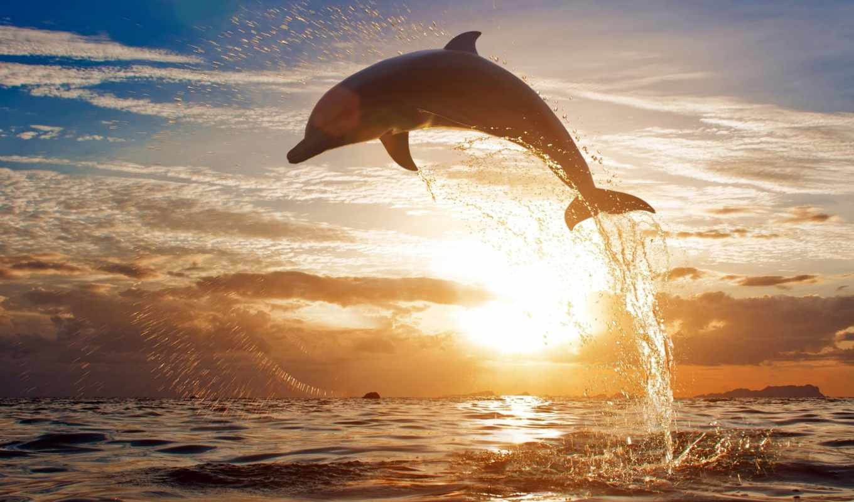 дельфин, are, ultimate, served, категория, закат, possible, desktop, resolution,