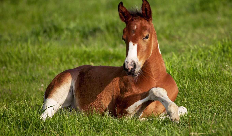 zhivotnye, лошадь, лошади,