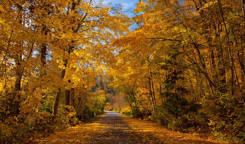 res, осень, premium, фото, канада, british