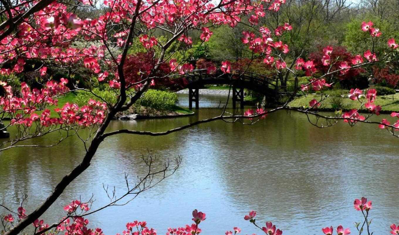 весна, природа, марта,