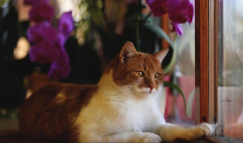 животные, кошки, коты, окно, кот,