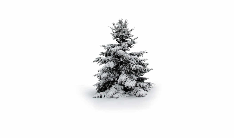 дерево, снег, winter, совершенно, свой,