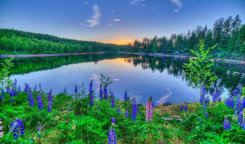 природа, цветы, озеро, landscape, house, деревья, лес, закат,