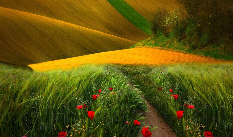 поле, дорога, фоны, природа, сквозь, клипарт, которое,
