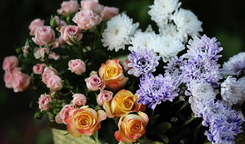 хризантемы, розы, цветы, роза, flowers, букет, графика,