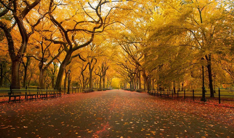 осень, парк, листья, деревья, природа, желтые,