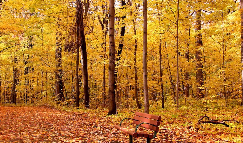 лес, код, товара, осенний, пейзаж, shutterstock,