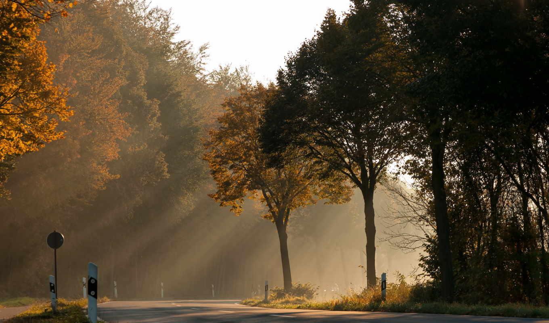 осень, дорога, деревья, свет, природа, лес,