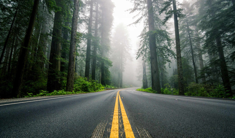 america, природа, дорога, северная, usa, лес, highway,
