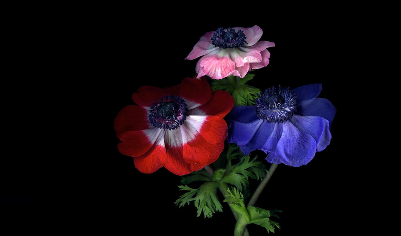 цветы, magda, индиго, янв, прочитать, черном, целикомв, сообщения, свой, цитатник, community,