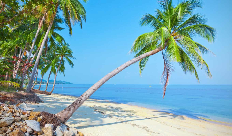 пляж, palm, дерево, море, природа, тег