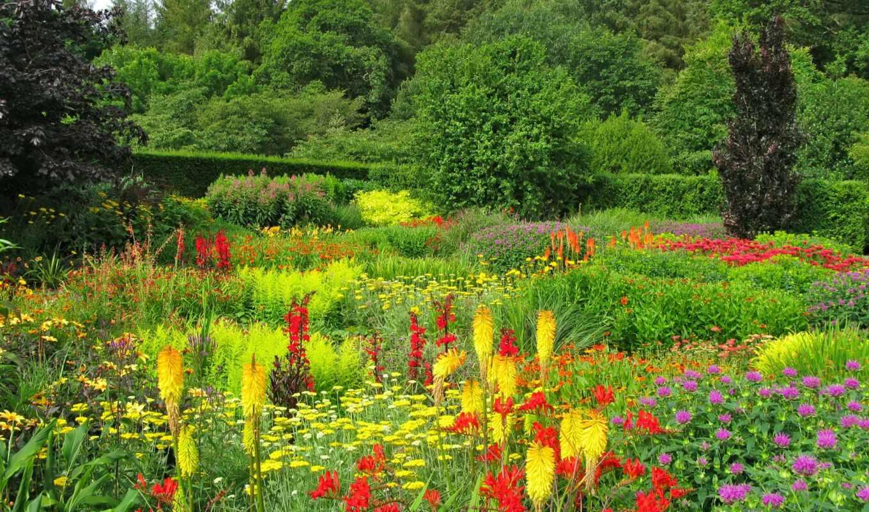park, лепестки, тюльпан, дерево
