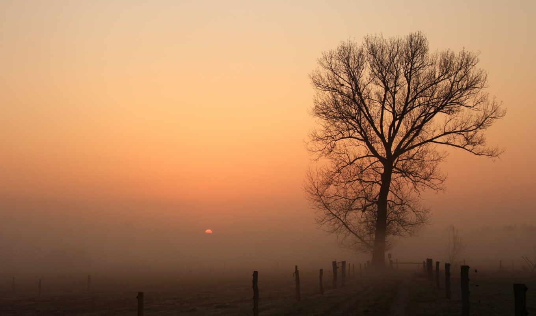 туман, дерево, природа, закат, забор, картинка, картинку,