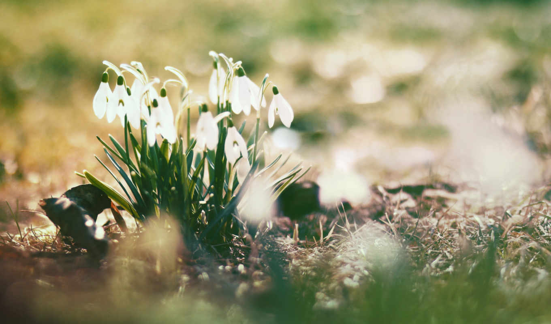 весна, подснежники, цветы, блики, sun,