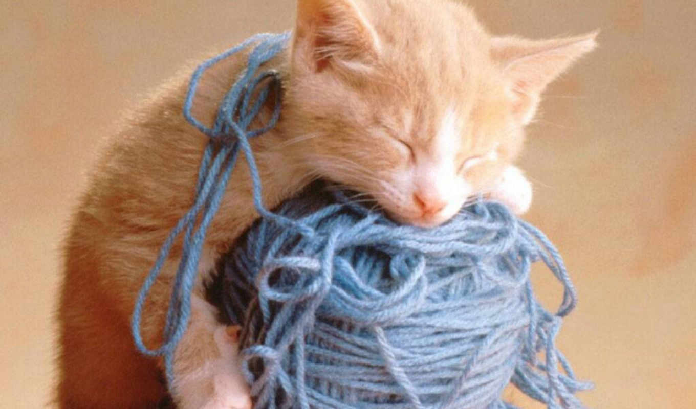 кошки, кошка, спят, делать, где, все, можно, кошек,