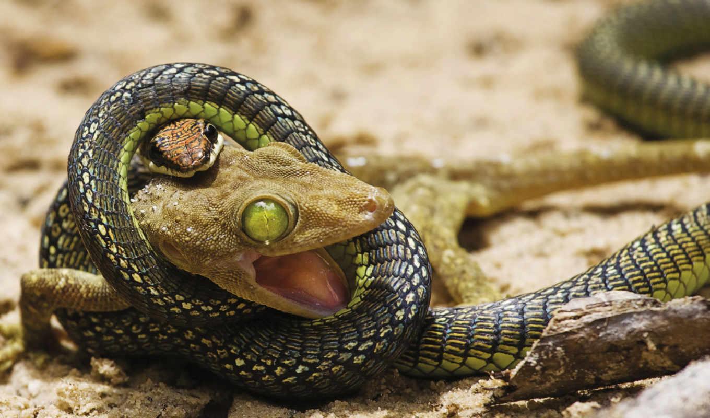 snake, ящер, бой, attack, борьба, обстановка,