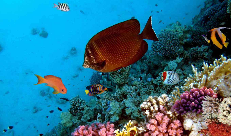 рыбки, фотообои, тропические, underwater, мебель, кораллы, world, за, цена, rub, желтые,