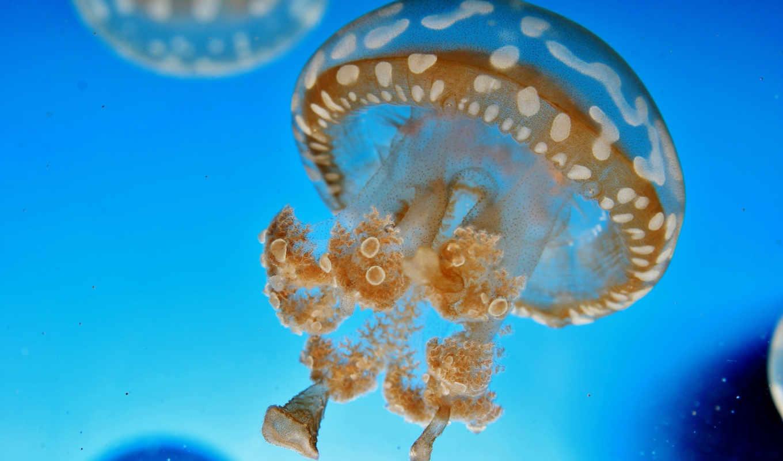 вода, мир, подводный, медуза, животные,