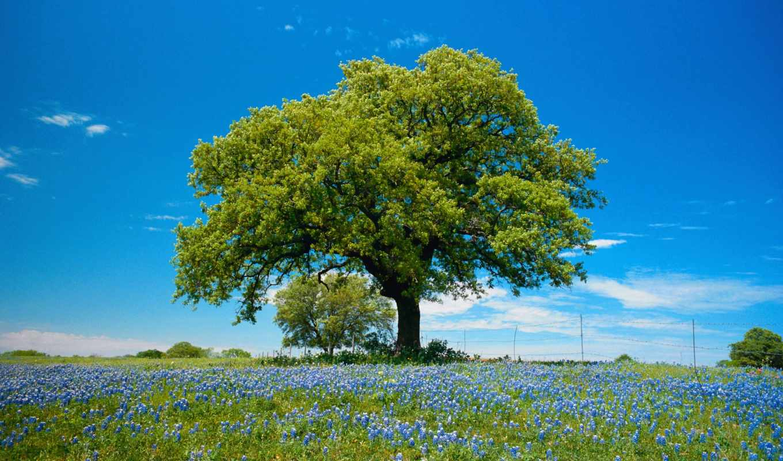 деревья, дерево, лес, весна, поля,
