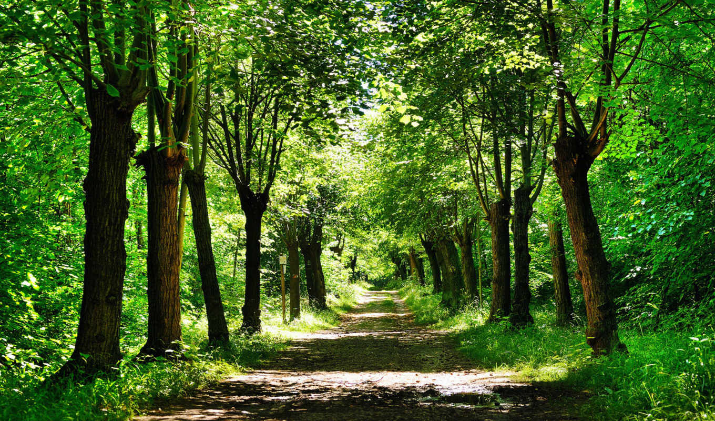 природа, тропинка, trees, путь, дорога, красивый, лес, park, трава, тропинки,