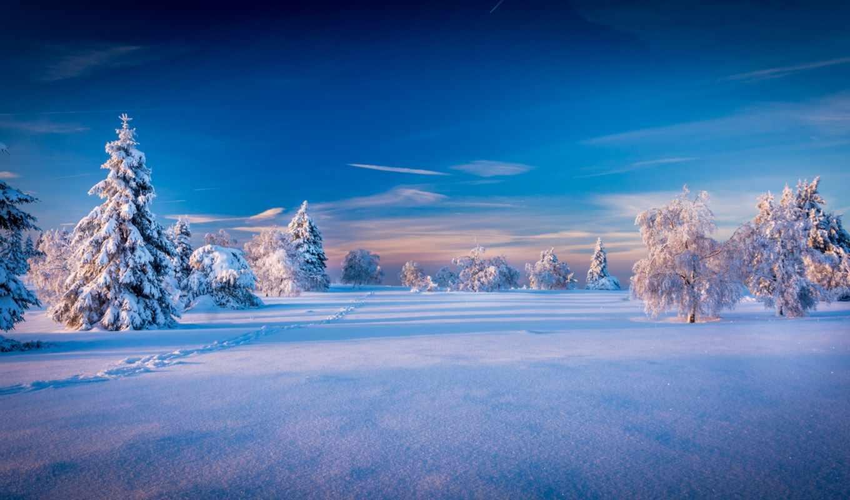 winter, небо, природа, снег, картинка, дней, trees, ёль,