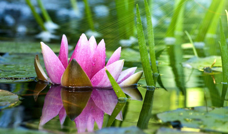lotus, funart, бамбук, мэри, kay, тело