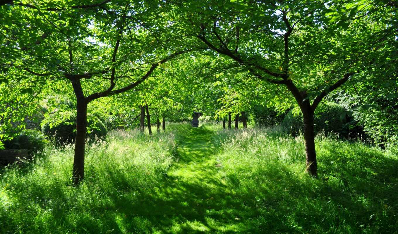 лето, green, солнце, красота,
