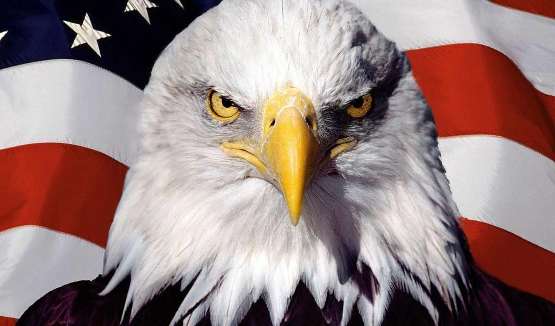 американский, ecran, drapeau, américain, fond, america, fonds, sur,