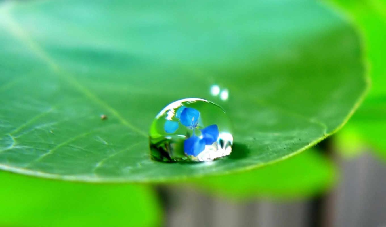 water, drop, drops, leaf,