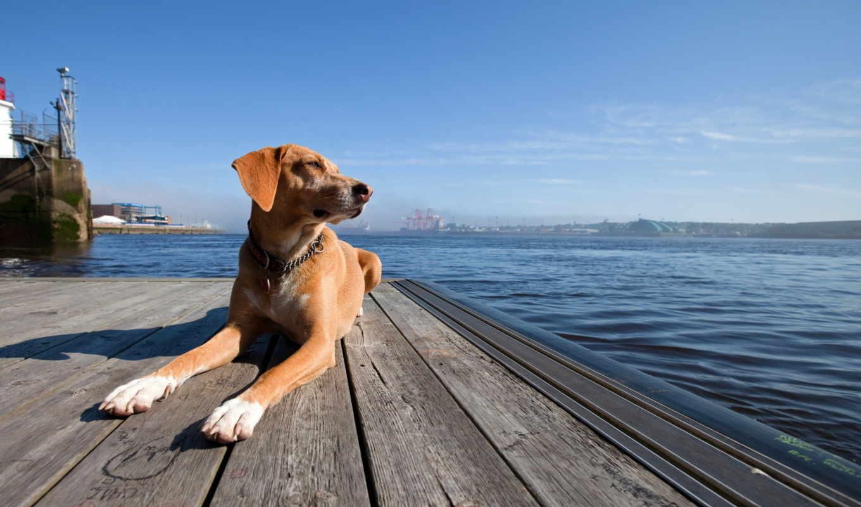 море, собака, высоком,