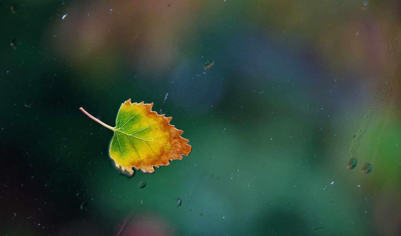 лист, осень, water, glass, капли, дождь, окно, leaf, rainy, one,
