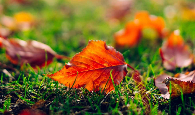 лист, листья, трава, оранжевые,