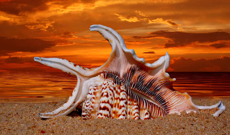 ракушки, природа, морская, раковины, star, море,