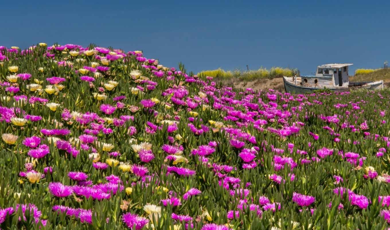 цветы, озеро, корабли, лодка, луг, причалы, неимоверная, холмы, красавица, природы, ни,