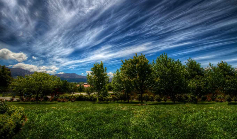 пейзаж, priroda, деревя, трава, les, зелень, небо,
