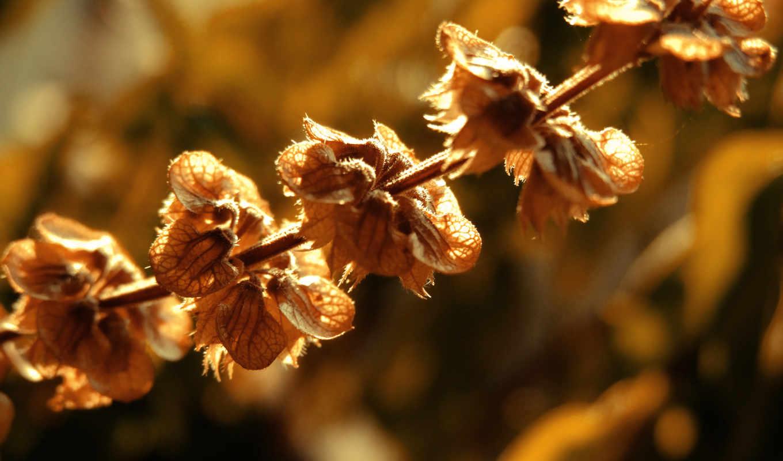 листья, цветы, осень, сухие, макро, засохшие, оранжевые, растительность,