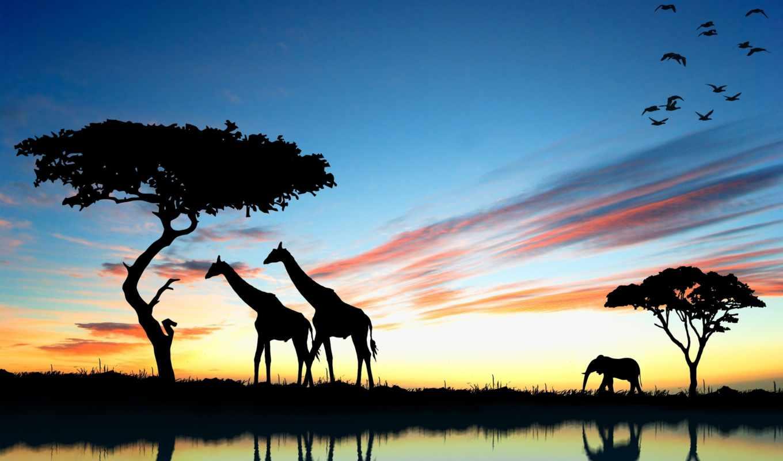 африка, фотографии, слон,