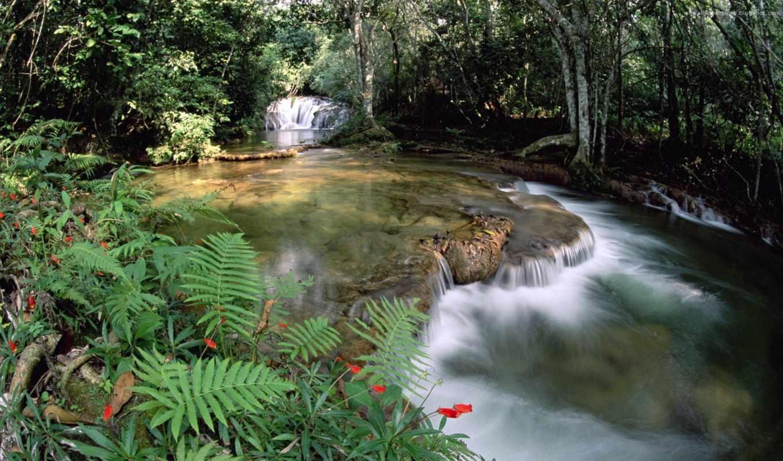 живые, добавил, водопад, nicol, отличные, fish, beaubien,