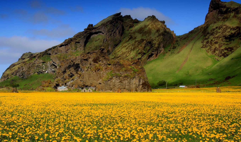 поле, цветы, небо, горы, долина, картинка, одуванчики,