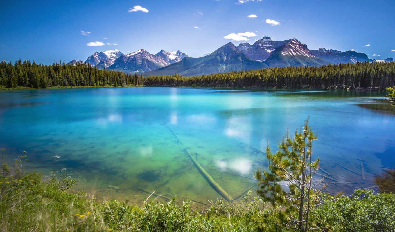 лес, горы, природа, море, озеро, поле, водопад, река, леса,