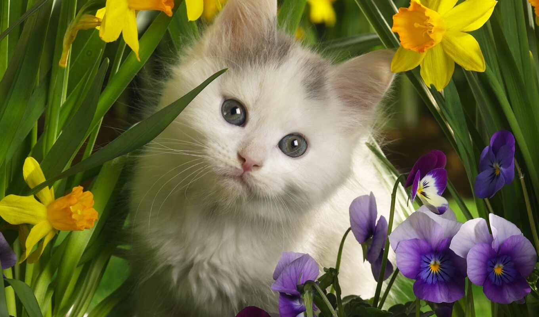 обои, котёнок, цветы, цветах, котенок, рыжий, коти
