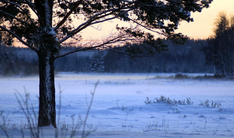 пейзажи, дерево, поле, зима,