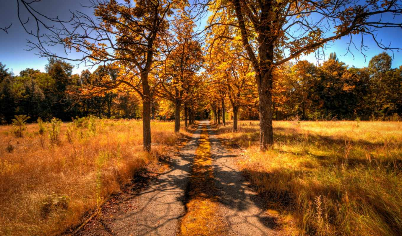 осень, пейзаж, деревья, дорога, картинка,
