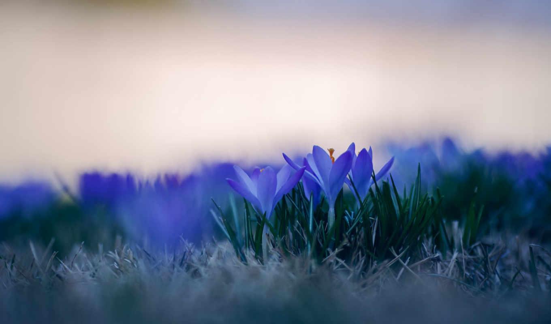 голубые, трава