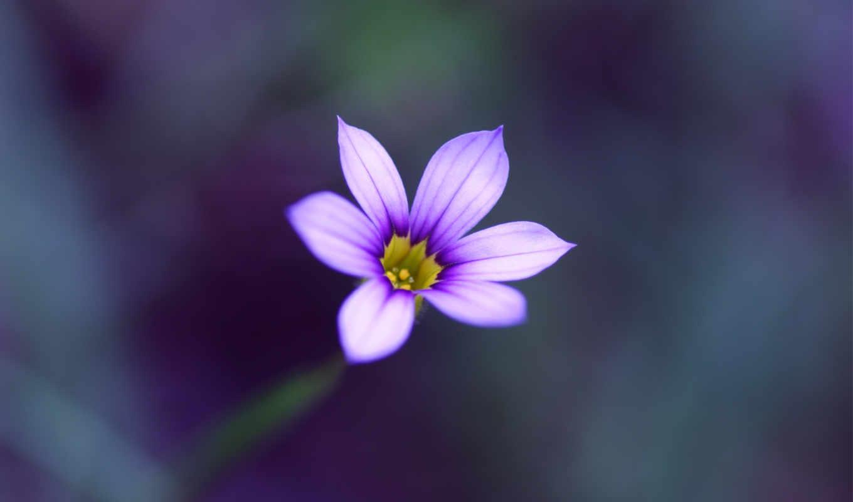 цветы, макро, размытость, качестве, базе, высоком,