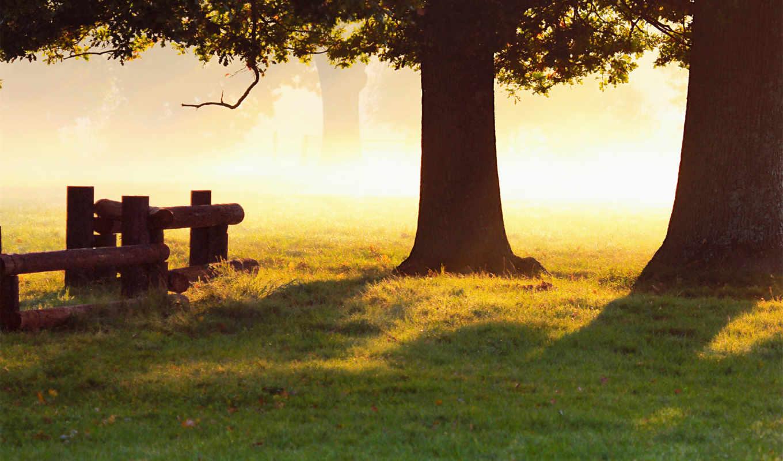 роса, утро, природа, трава, капли, свет, осень, базе, качестве, нов,