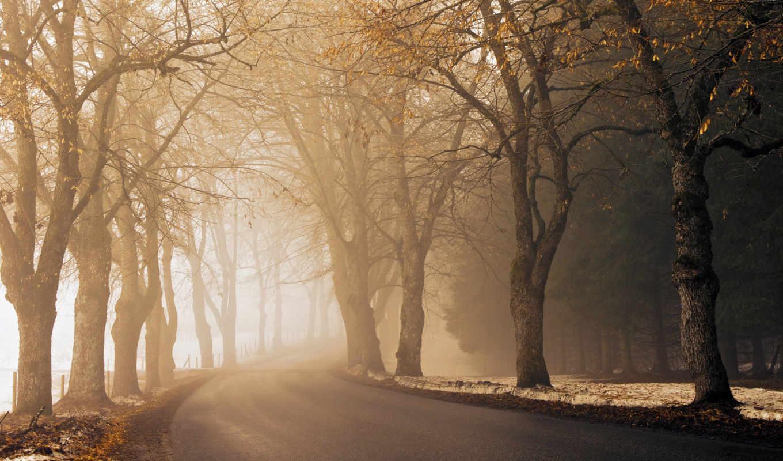 дорога, утро, асфальт, туман, осень, путь, далеко, mist,