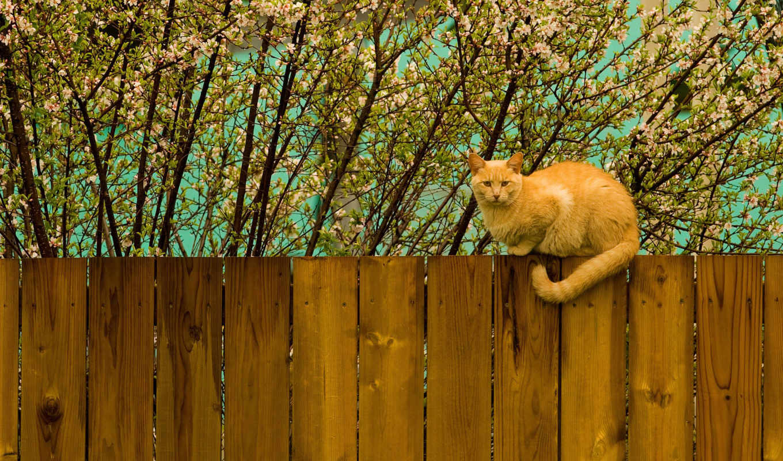 кот, стена, red, sitting, zhivotnye, весна, рыжие, sit,