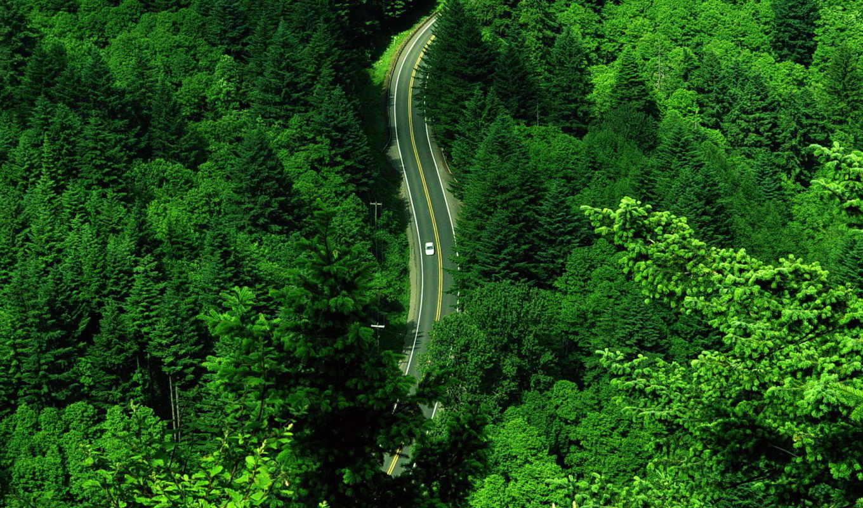 обои, дорога, лес, лесу, quot, обоев, лесная, прир
