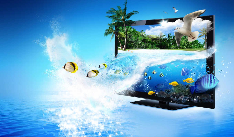 море, пальмы, монитор, рыбы, блики, чайки, tv, best, creative, картинка, lcd, world, ecran, картинку, nature, fonds,